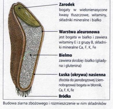 ziarno-przepisynazdrowie.com-chleba-naszego-powszedniego
